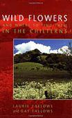 Wild Flowers: Chilterns