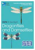 RSPB ID Spotlight Dragonflies and Damselflies