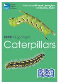 RSPB ID Spotlight Caterpillars