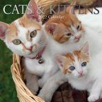 Cats & Kittens 16 Month Calendar 2022