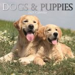 Dogs & Puppies 16 Month Calendar 2021