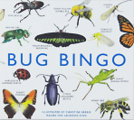 Bug Bingo (Game)
